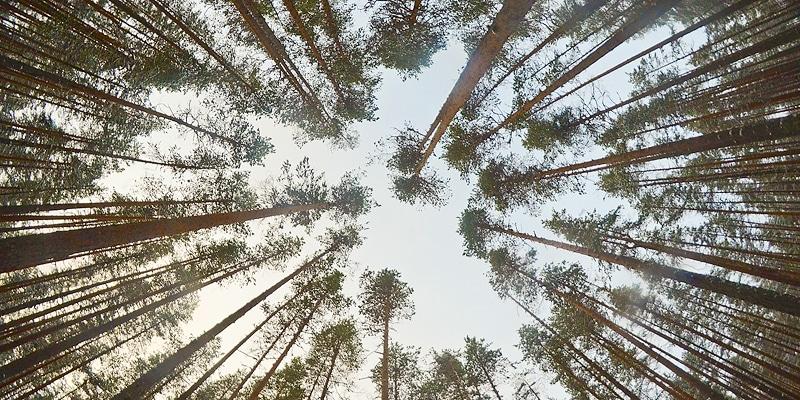 Gemensam skogspolitik i EU? - Katternö Digital 3 | 2017
