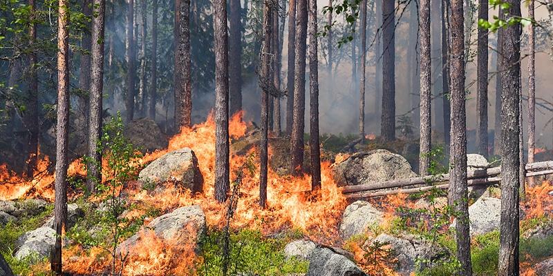 Metsäyhtiö tuikkasi metsän tuleen - Katternö Digital 2 | 2018